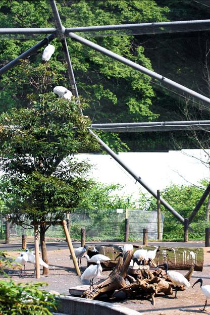 多摩動物園220