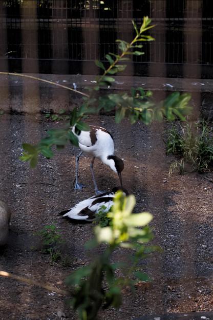 多摩動物園223
