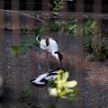 Photos: 多摩動物園223