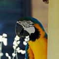 多摩動物園233