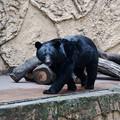 多摩動物園239