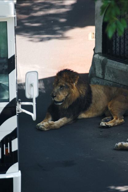 多摩動物園074