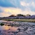 Photos: 入間川
