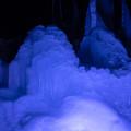 Photos: 氷点下の森