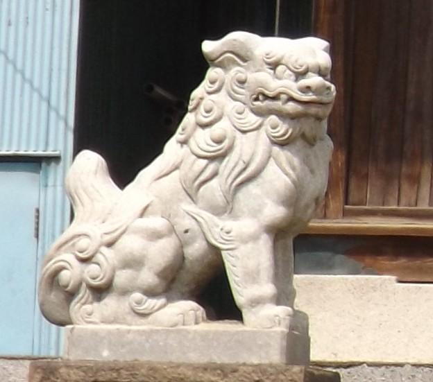2018/04/02(月)・天祖神社・貴乃花部屋の近所(狛犬様・左)