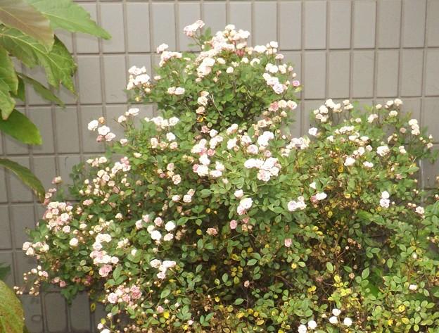 2018/05/28(月)・何のお花だろう???