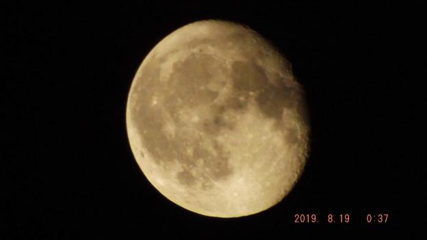 2019/08/19(月)のお月様