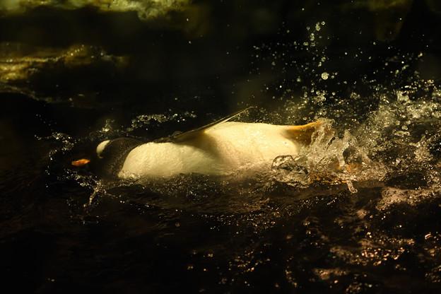 写真: ペンギンかわいい