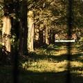 写真: 並木