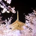 Photos: 東寺_桜_輝き