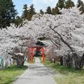 Photos: 0414_まだ桜が!