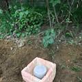 0920_お彼岸の埋葬