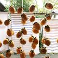 1020_干し柿を作る