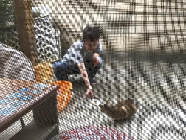 0827_網戸越しのアヤベーとキママ