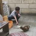 Photos: 0827_網戸越しのアヤベーとキママ