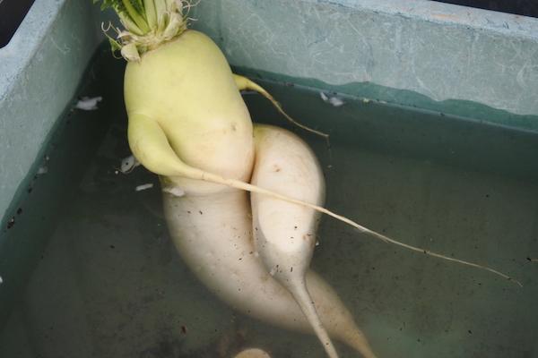 家内のセクシーな入浴シーン