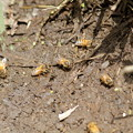写真: 蜂も水を飲む