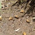 蜂も水を飲む