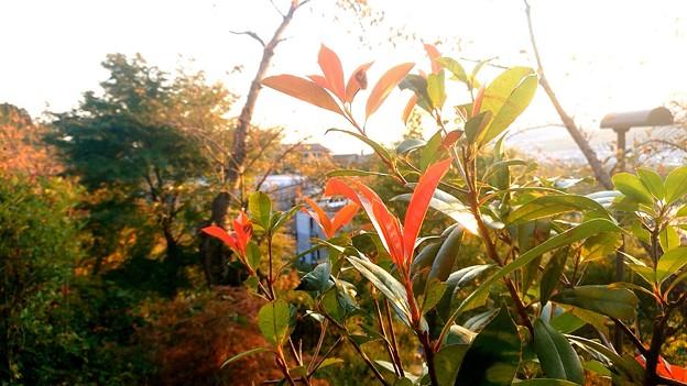 Photos: 季節の訪れ