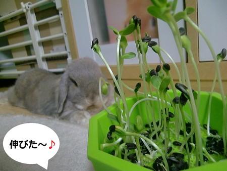 芽を出せ1
