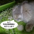 Photos: あ3