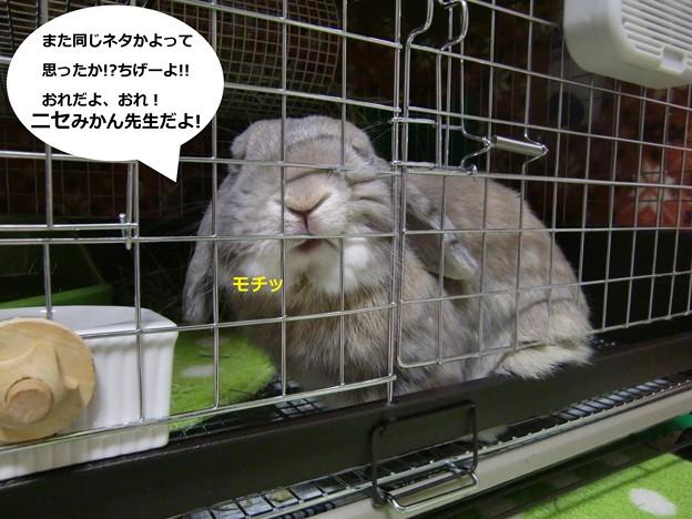 Photos: ニセ先生1