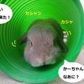 Photos: 遊ぼう2