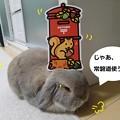 Photos: 秋の便り3