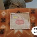 Photos: ぽかぽか1