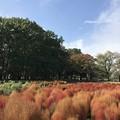 Photos: 小金井公園