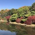 写真: 小石川植物園
