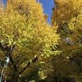 Photos: 東京大学