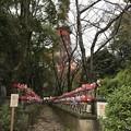 Photos: 増上寺3