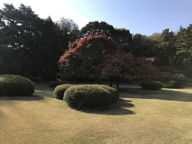 新宿御苑 025