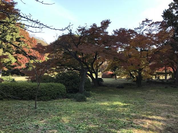 新宿御苑 026