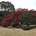Photos: 六義園 004