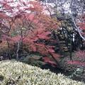 Photos: 六義園 009