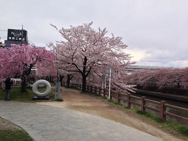 草加松原遊歩道4