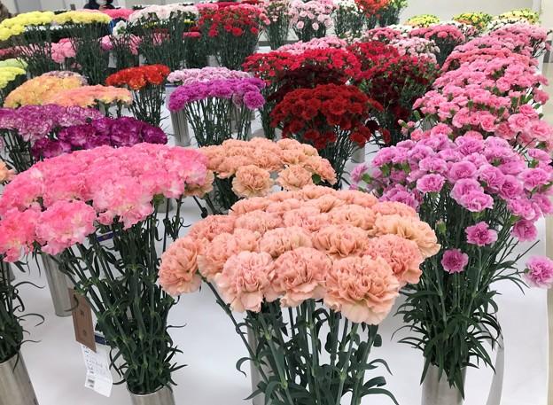 関東東海花の展覧会
