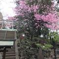 Photos: 富士神社