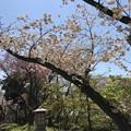 Photos: 飛鳥山