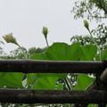 Photos: 向島百花園