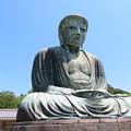 Photos: 高徳院