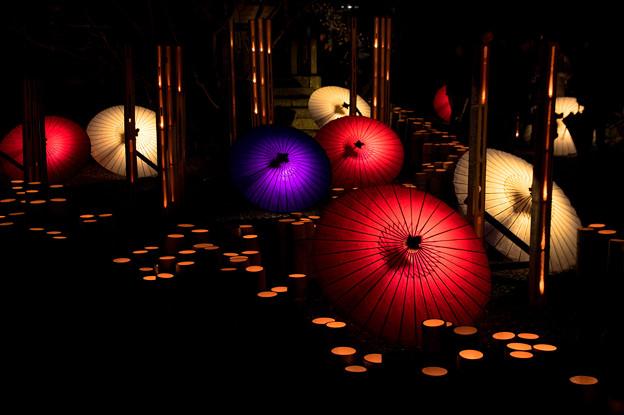 山鹿灯篭浪漫:百華百彩♪2