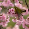 Photos: 春色に囲まれて・・・。3