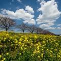 春の草場川♪