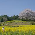 写真: 馬場の山桜♪