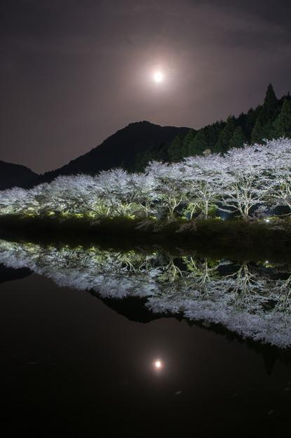 赤穂山八天桜♪