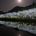 写真: 赤穂山八天桜♪