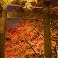写真: 竈門神社ライトアップ♪